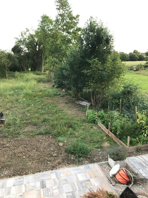 Garten im Juli 2017